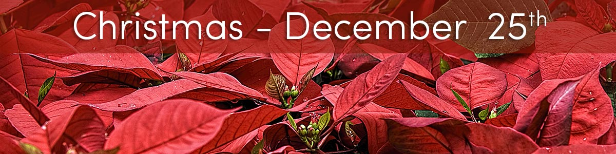 Celebrate the holidays with beautiful Christmas flowers, winter bouquets, and thoughtful holiday gifts galore!