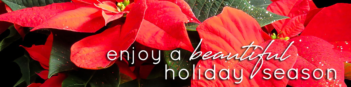 Enjoy a beautiful holiday season with vibrant blooming plants, fresh winter flowers and more. Shop today!