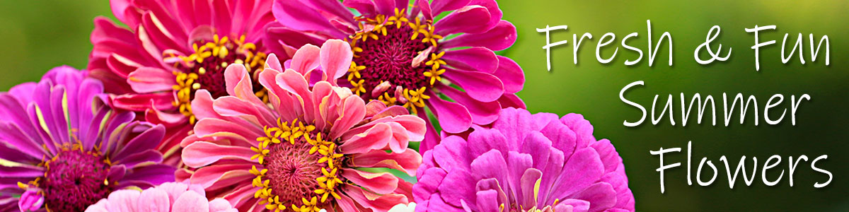 Fresh & Fun Summer Flowers are here! Send the gift of floral sunshine today!