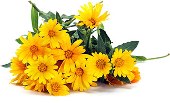 The marigold is one of October's signature flowers.