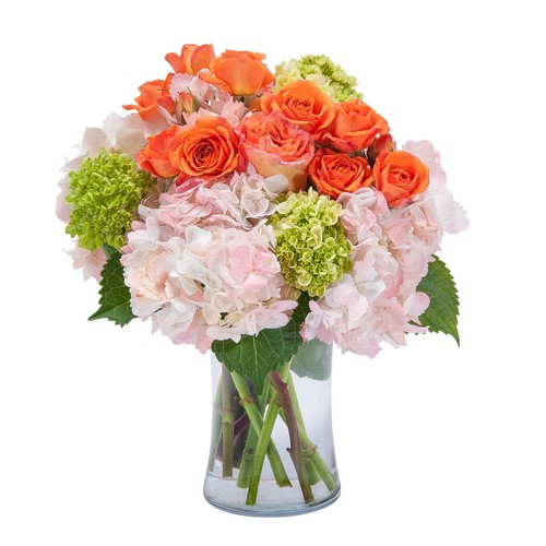 Beauty in Blossom
