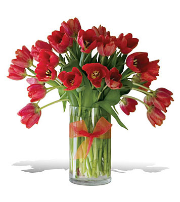 Radiantly Red Tulips - Premium