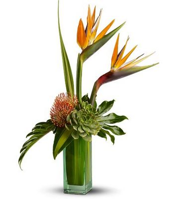 Birds of Beauty